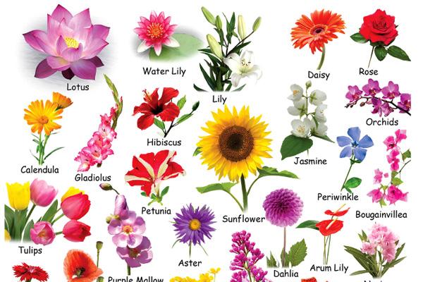 Bỏ túi liền tay tên các loài hoa bằng tiếng Anh